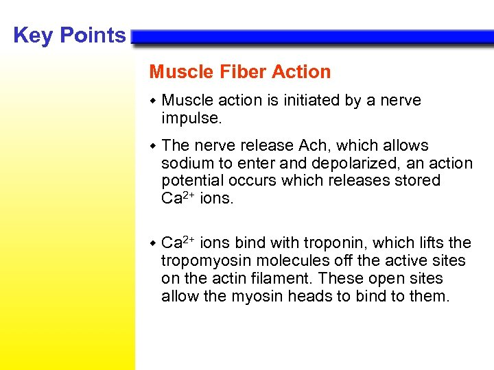 Key Points Muscle Fiber Action w Muscle action is initiated by a nerve impulse.