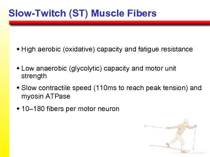 Slow-Twitch (ST) Muscle Fibers w High aerobic (oxidative) capacity and fatigue resistance w Low