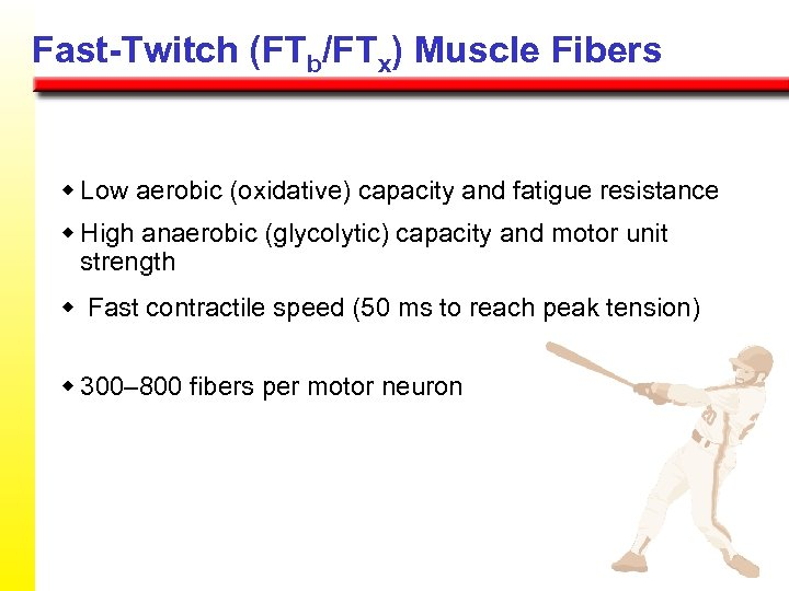 Fast-Twitch (FTb/FTx) Muscle Fibers w Low aerobic (oxidative) capacity and fatigue resistance w High