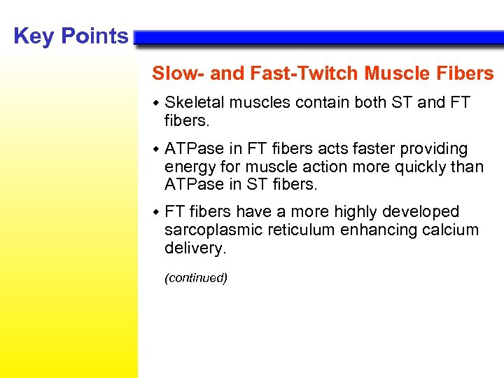 Key Points Slow- and Fast-Twitch Muscle Fibers w Skeletal muscles contain both ST and