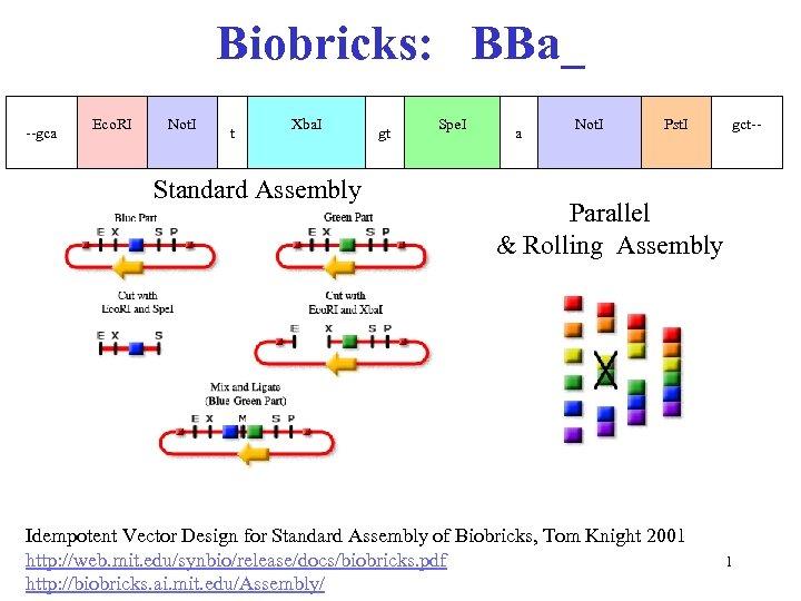 Biobricks: BBa_ --gca Eco. RI Not. I t Xba. I Standard Assembly gt Spe.