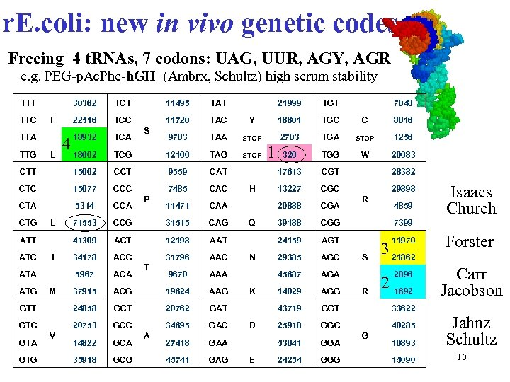 r. E. coli: new in vivo genetic codes Freeing 4 t. RNAs, 7 codons: