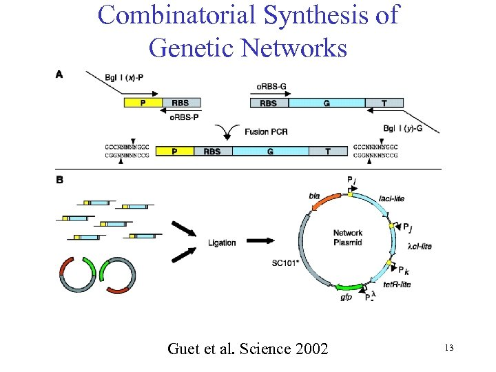 Combinatorial Synthesis of Genetic Networks Guet et al. Science 2002 13