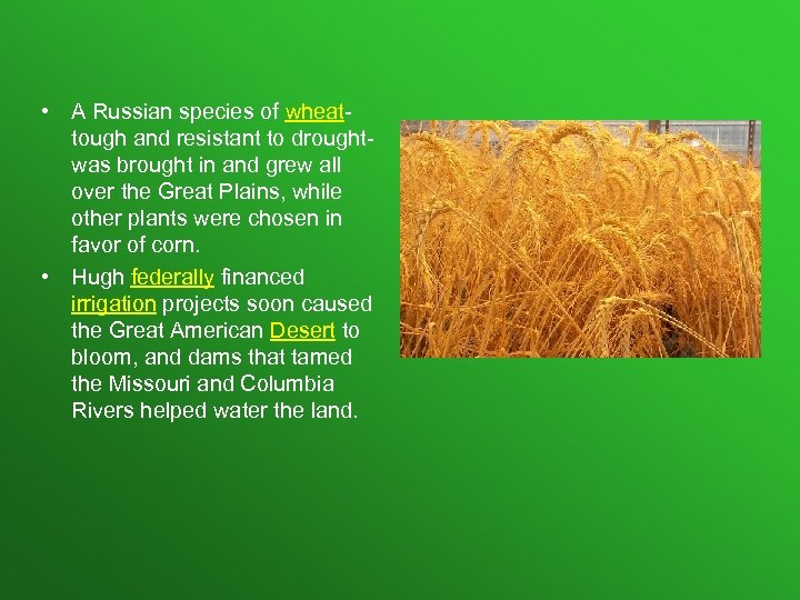 • A Russian species of wheattough and resistant to droughtwas brought in and
