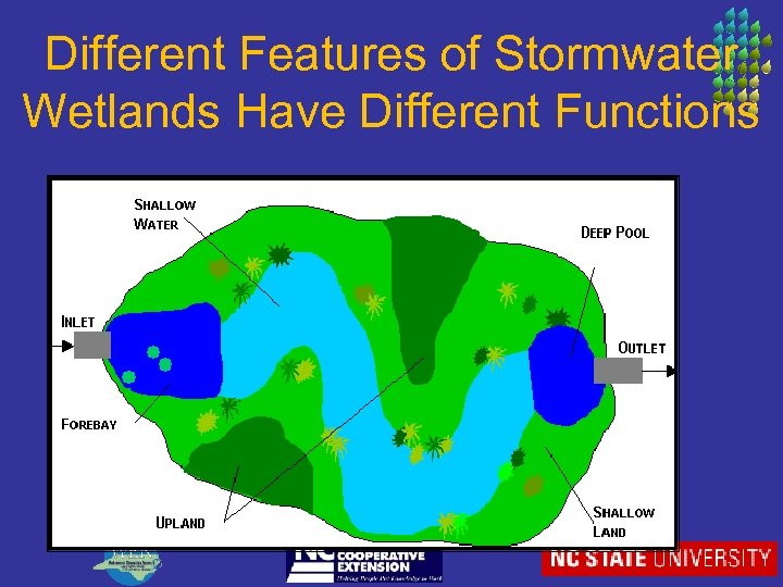 Different Features of Stormwater Wetlands Have Different Functions