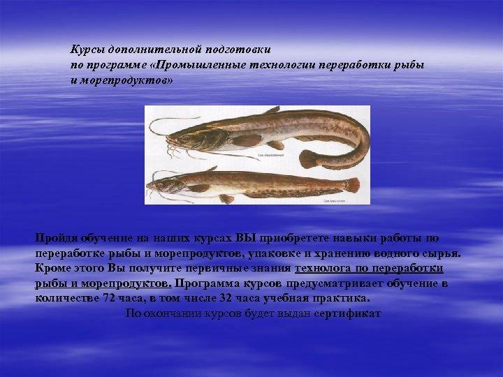 Курсы дополнительной подготовки по программе «Промышленные технологии переработки рыбы и морепродуктов» Пройдя обучение на