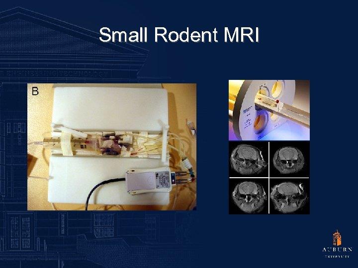 Small Rodent MRI