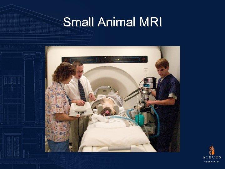 Small Animal MRI