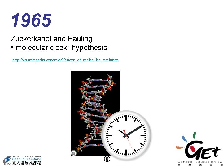 "1965 Zuckerkandl and Pauling • ""molecular clock"" hypothesis. http: //en. wikipedia. org/wiki/History_of_molecular_evolution 24"