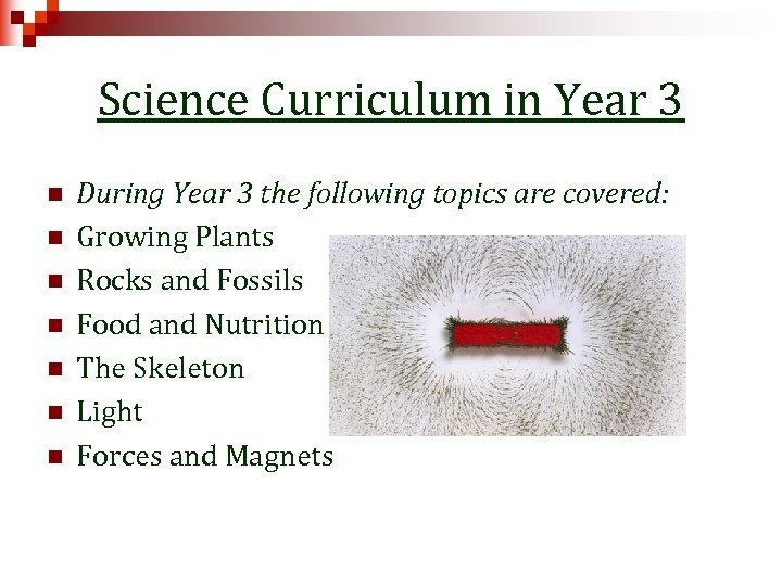 Science Curriculum in Year 3 n n n n During Year 3 the following