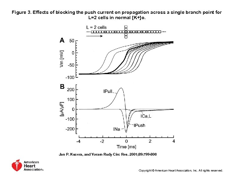 Figure 3. Effects of blocking the push current on propagation across a single branch