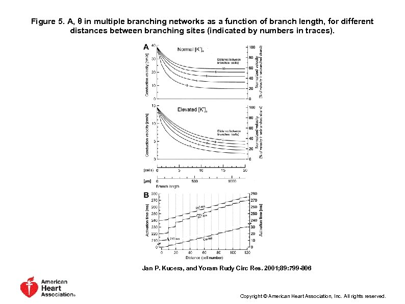 Figure 5. A, θ in multiple branching networks as a function of branch length,