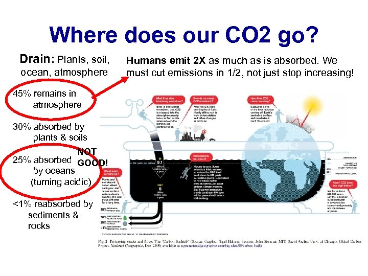 Where does our CO 2 go? Drain: Plants, soil, ocean, atmosphere 45% remains in