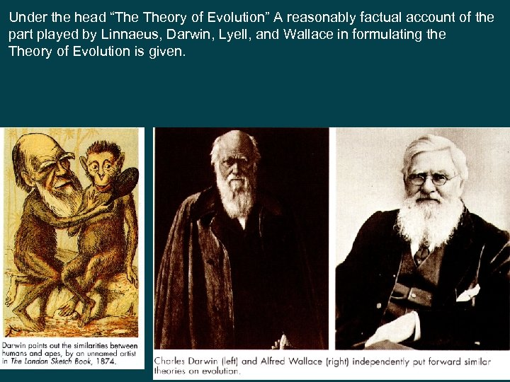 """Under the head """"The Theory of Evolution"""" A reasonably factual account of the part"""