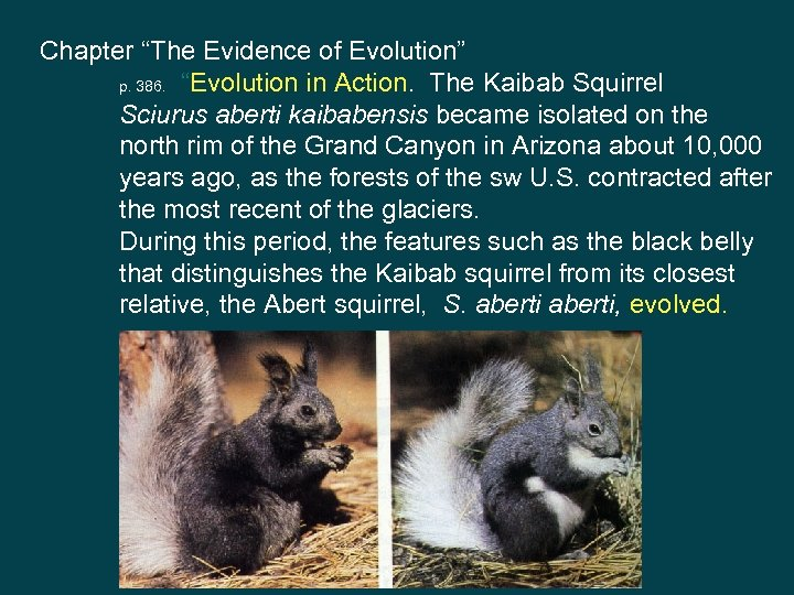 """Chapter """"The Evidence of Evolution"""" p. 386. """"Evolution in Action. The Kaibab Squirrel Sciurus"""