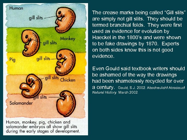 """The crease marks being called """"Gill slits"""" are simply not gill slits. They should"""