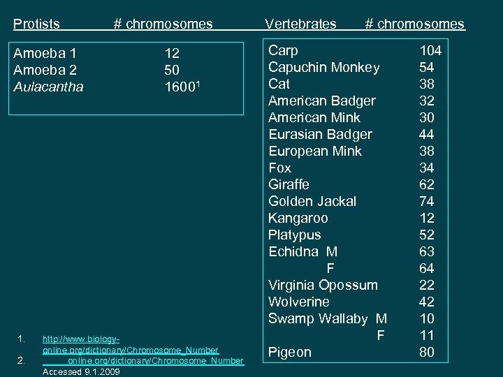 Protists Amoeba 1 Amoeba 2 Aulacantha 1. 2. # chromosomes 12 50 16001 http: