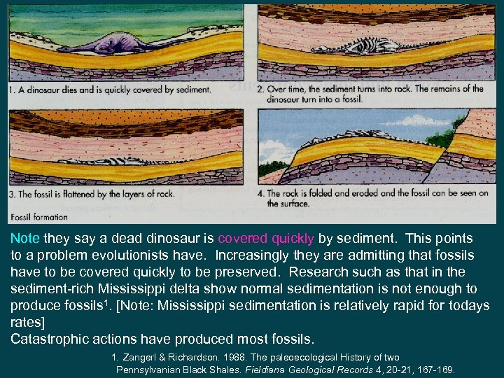 Note they say a dead dinosaur is covered quickly by sediment. This points to