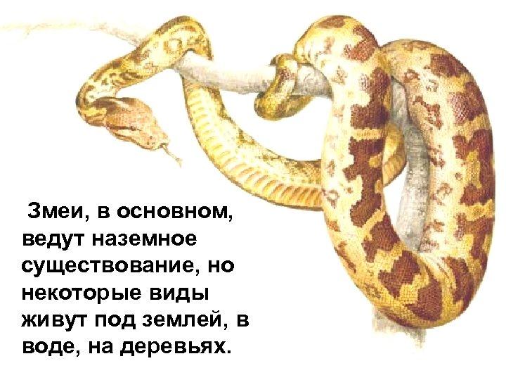 Змеи, в основном, ведут наземное существование, но некоторые виды живут под землей, в