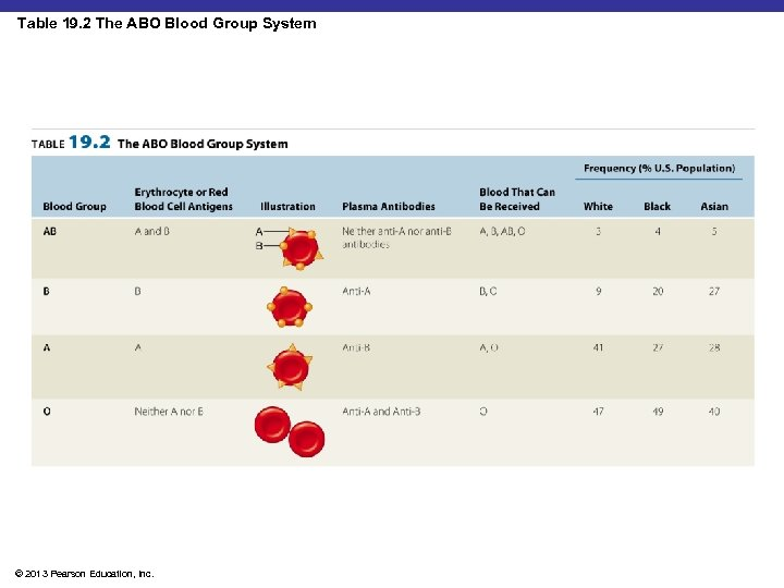 Table 19. 2 The ABO Blood Group System Insert Table 19. 2 © 2013