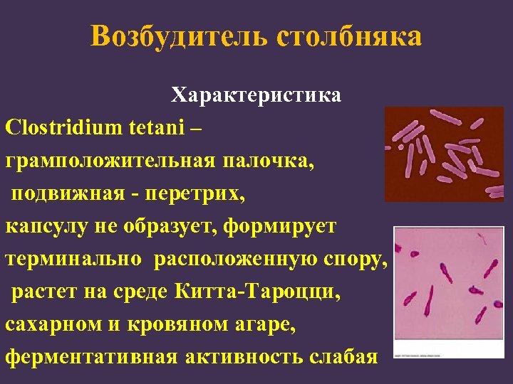 Возбудитель столбняка Характеристика Clostridium tetani – грамположительная палочка, подвижная - перетрих, капсулу не образует,