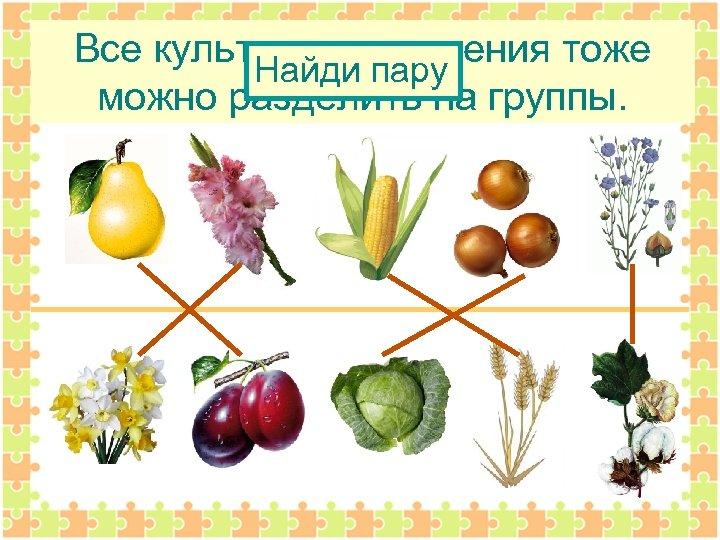 Все культурные пару растения тоже Найди можно разделить на группы.
