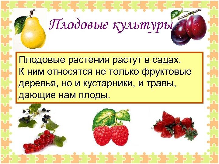 Плодовые культуры Плодовые растения растут в садах. К ним относятся не только фруктовые деревья,