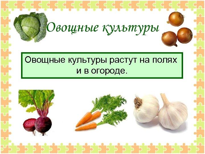Овощные культуры растут на полях и в огороде.