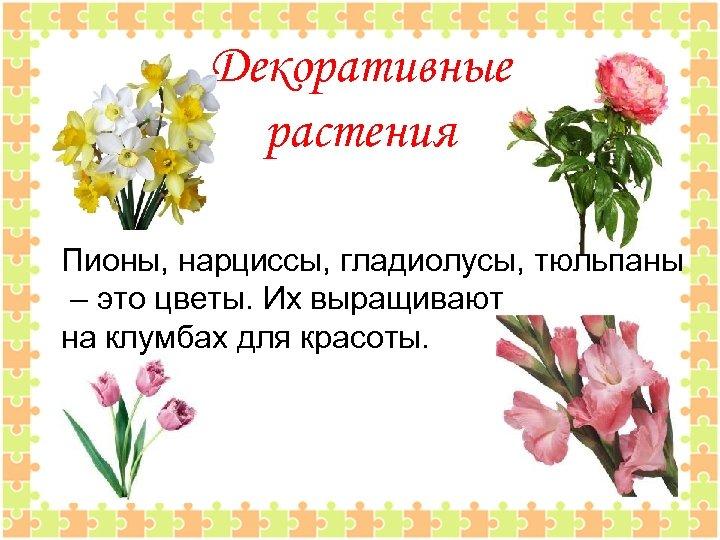 Декоративные растения Пионы, нарциссы, гладиолусы, тюльпаны – это цветы. Их выращивают на клумбах для