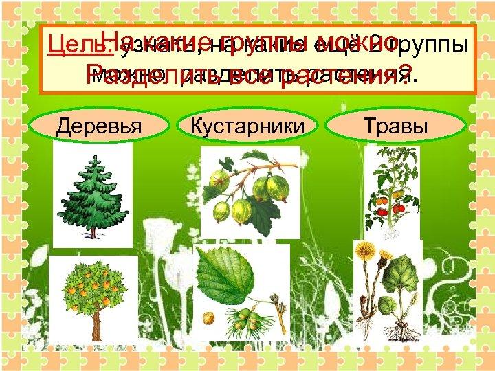 На какие группы можно Цель: узнать, на какие ещё 2 группы можно разделить растения.
