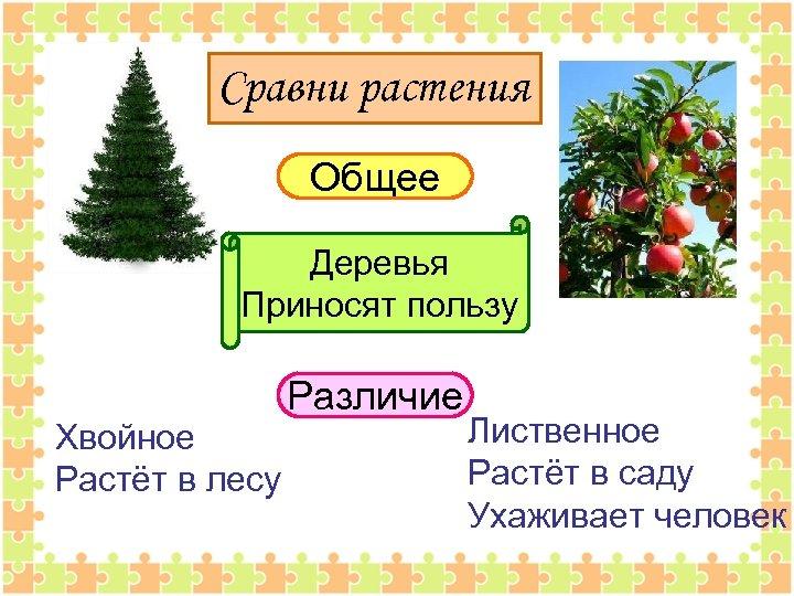 Сравни растения Общее Деревья Приносят пользу Хвойное Растёт в лесу Различие Лиственное Растёт в
