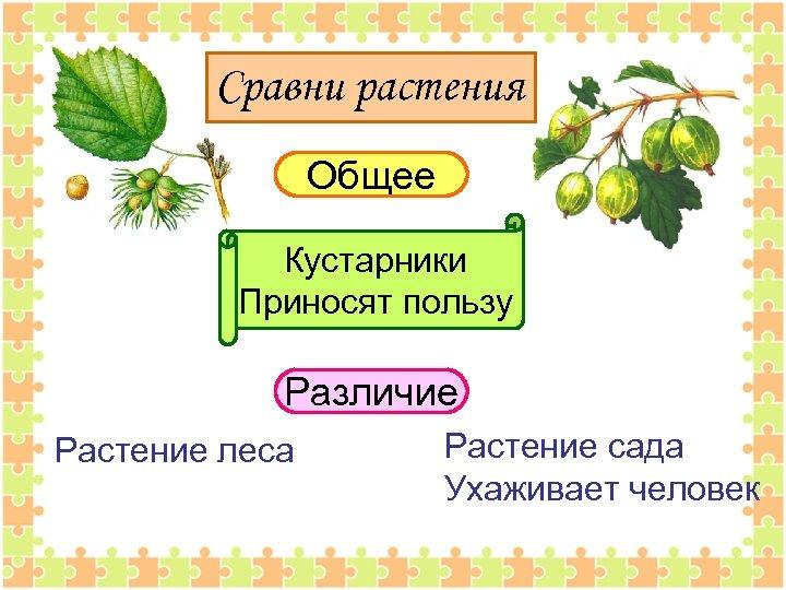 Сравни растения Общее Кустарники Приносят пользу Различие Растение леса Растение сада Ухаживает человек