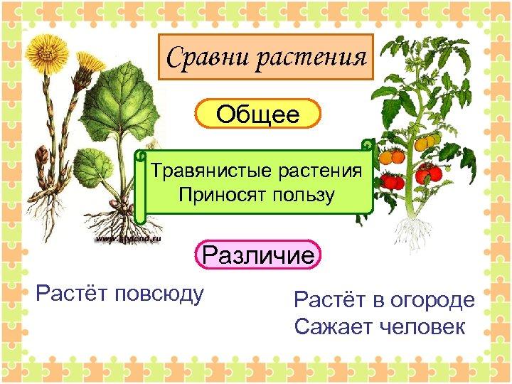 Сравни растения Общее Травянистые растения Приносят пользу Различие Растёт повсюду Растёт в огороде Сажает