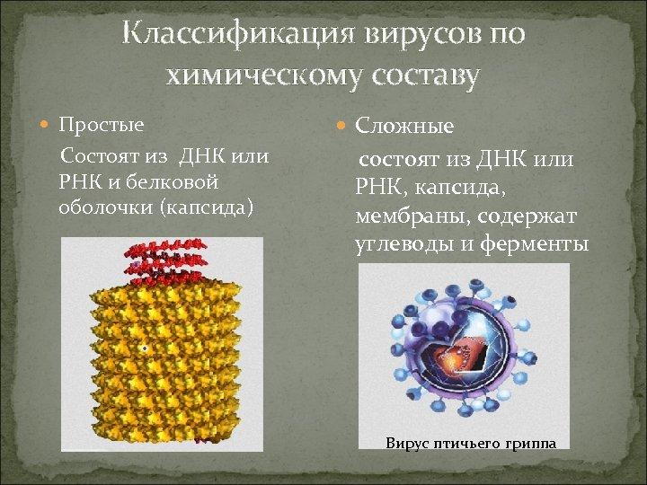 Классификация вирусов по химическому составу Простые Состоят из ДНК или РНК и белковой оболочки