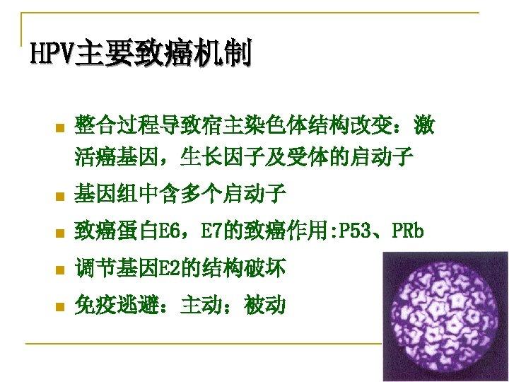 HPV主要致癌机制 n 整合过程导致宿主染色体结构改变:激 活癌基因,生长因子及受体的启动子 n 基因组中含多个启动子 n 致癌蛋白E 6,E 7的致癌作用: P 53、PRb n 调节基因E