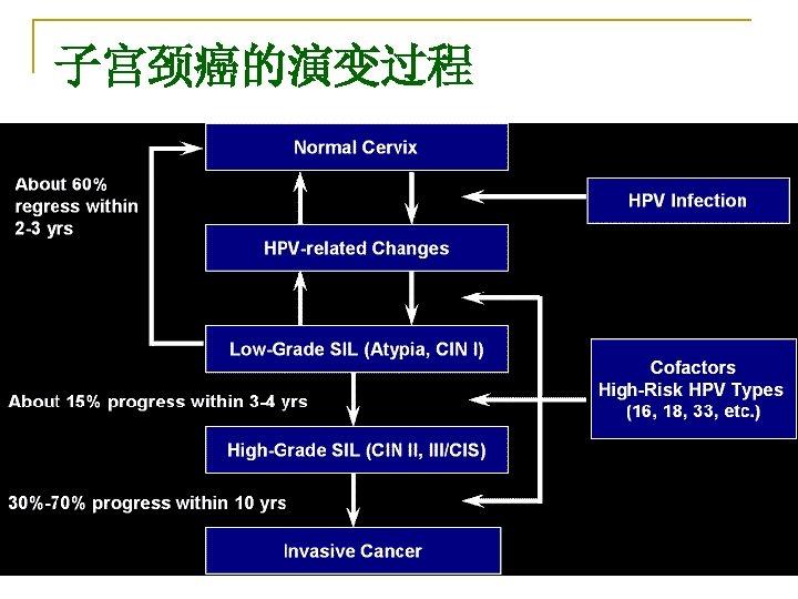 子宫颈癌的演变过程