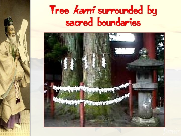 Tree kami surrounded by sacred boundaries