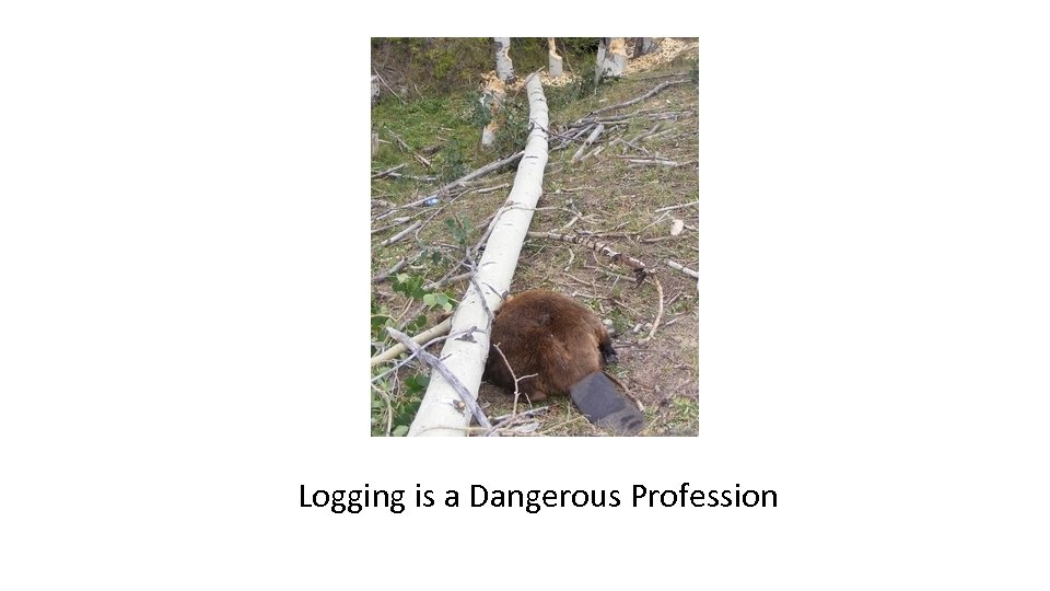 Logging is a Dangerous Profession