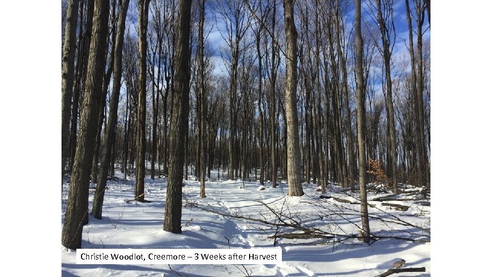 Christie Woodlot, Creemore – 3 Weeks after Harvest