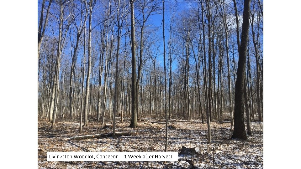 Livingston Woodlot, Consecon – 1 Week after Harvest