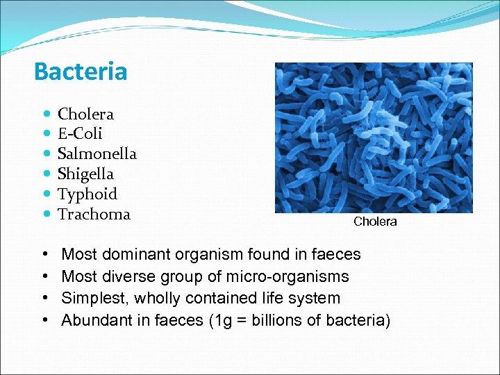 Bacteria Cholera E-Coli Salmonella Shigella Typhoid Trachoma • • Most dominant organism found in