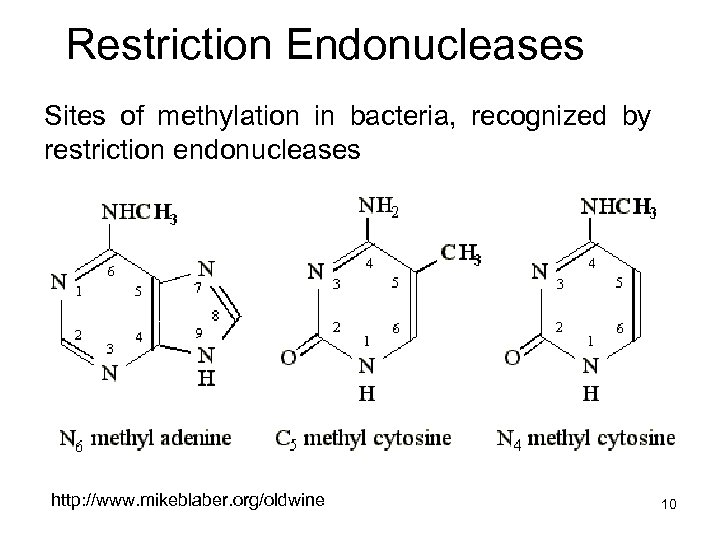 Restriction Endonucleases Sites of methylation in bacteria, recognized by restriction endonucleases http: //www. mikeblaber.