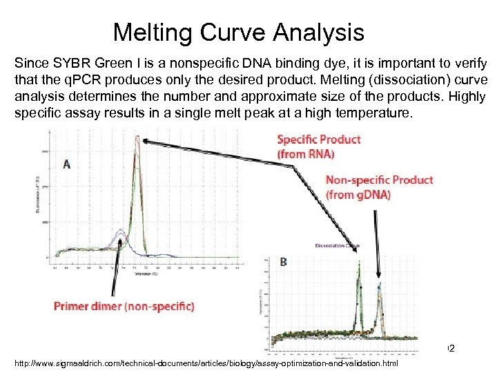 Melting Curve Analysis Since SYBR Green I is a nonspecific DNA binding dye, it
