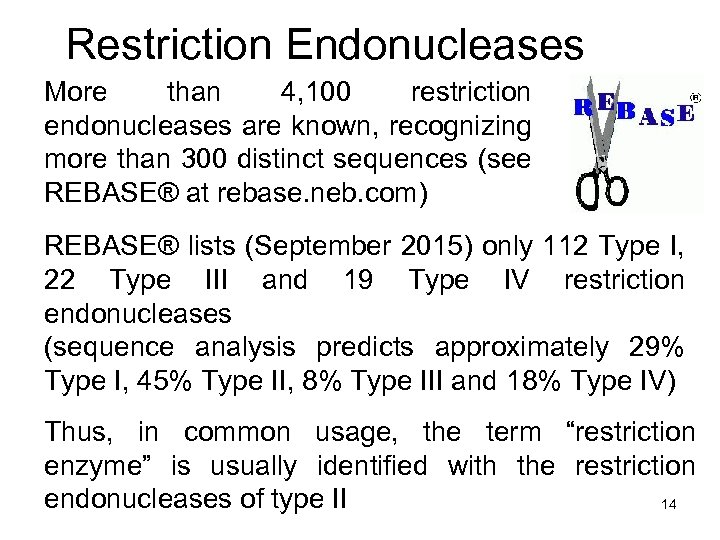 Restriction Endonucleases More than 4, 100 restriction endonucleases are known, recognizing more than 300
