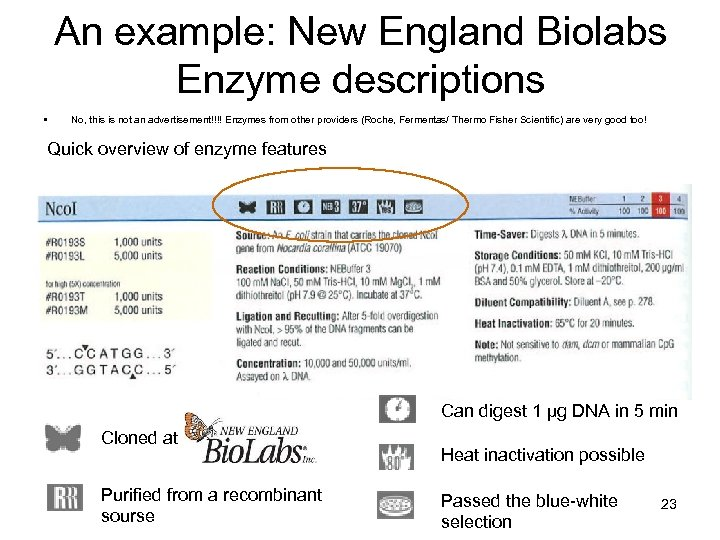 An example: New England Biolabs Enzyme descriptions • No, this is not an advertisement!!!!