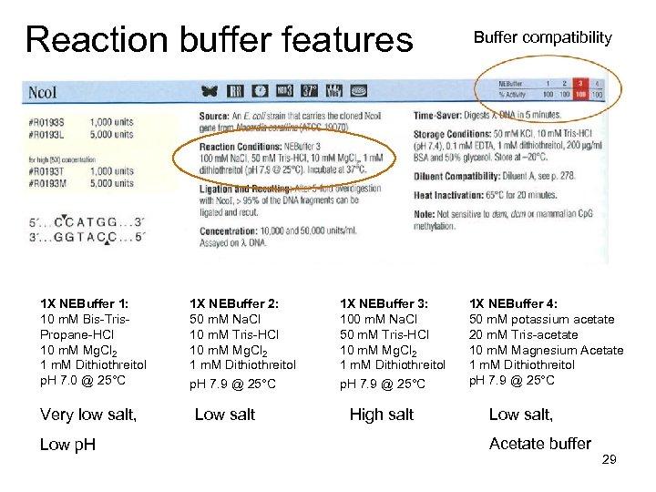 Reaction buffer features 1 X NEBuffer 1: 10 m. M Bis-Tris. Propane-HCl 10 m.