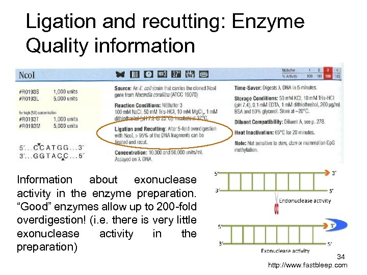 Ligation and recutting: Enzyme Quality information Information about exonuclease activity in the enzyme preparation.