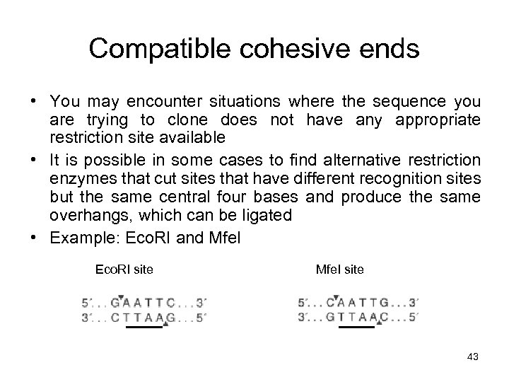 Compatible cohesive ends • You may encounter situations where the sequence you are trying