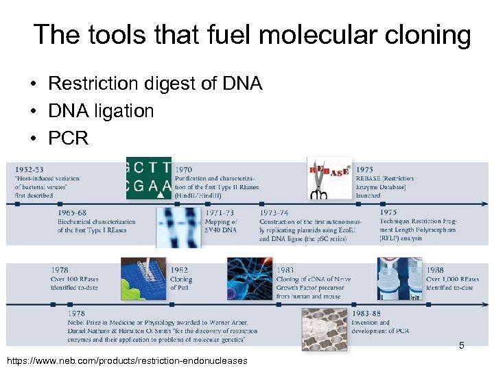 The tools that fuel molecular cloning • Restriction digest of DNA • DNA ligation
