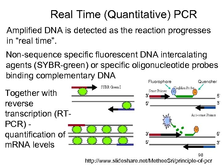 """Real Time (Quantitative) PCR Amplified DNA is detected as the reaction progresses in """"real"""